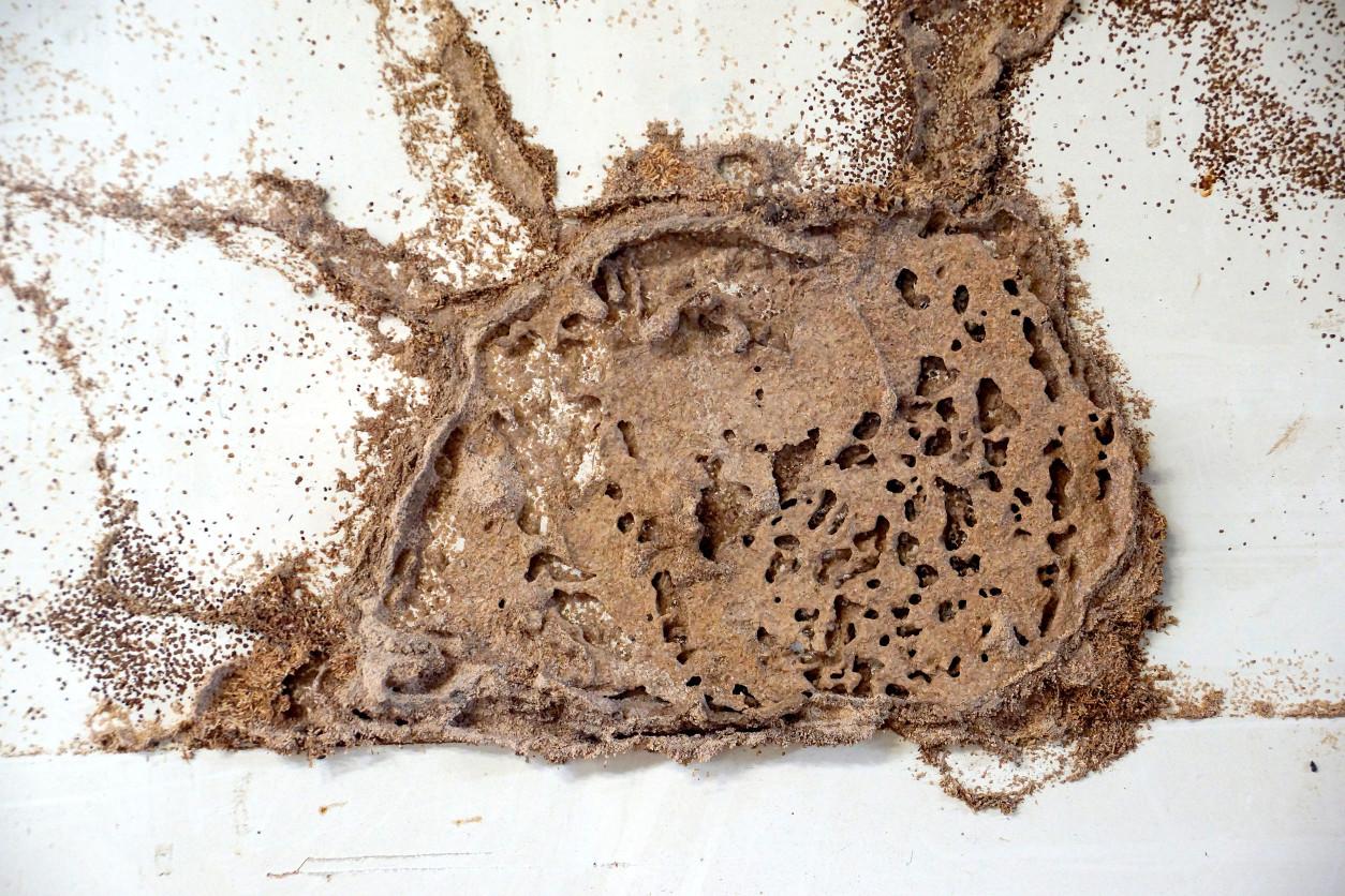 白蟻巢往往會發現如同百川匯流般,許多小支流集中匯集到中央的蟻巢,形成一個完善取食的道路