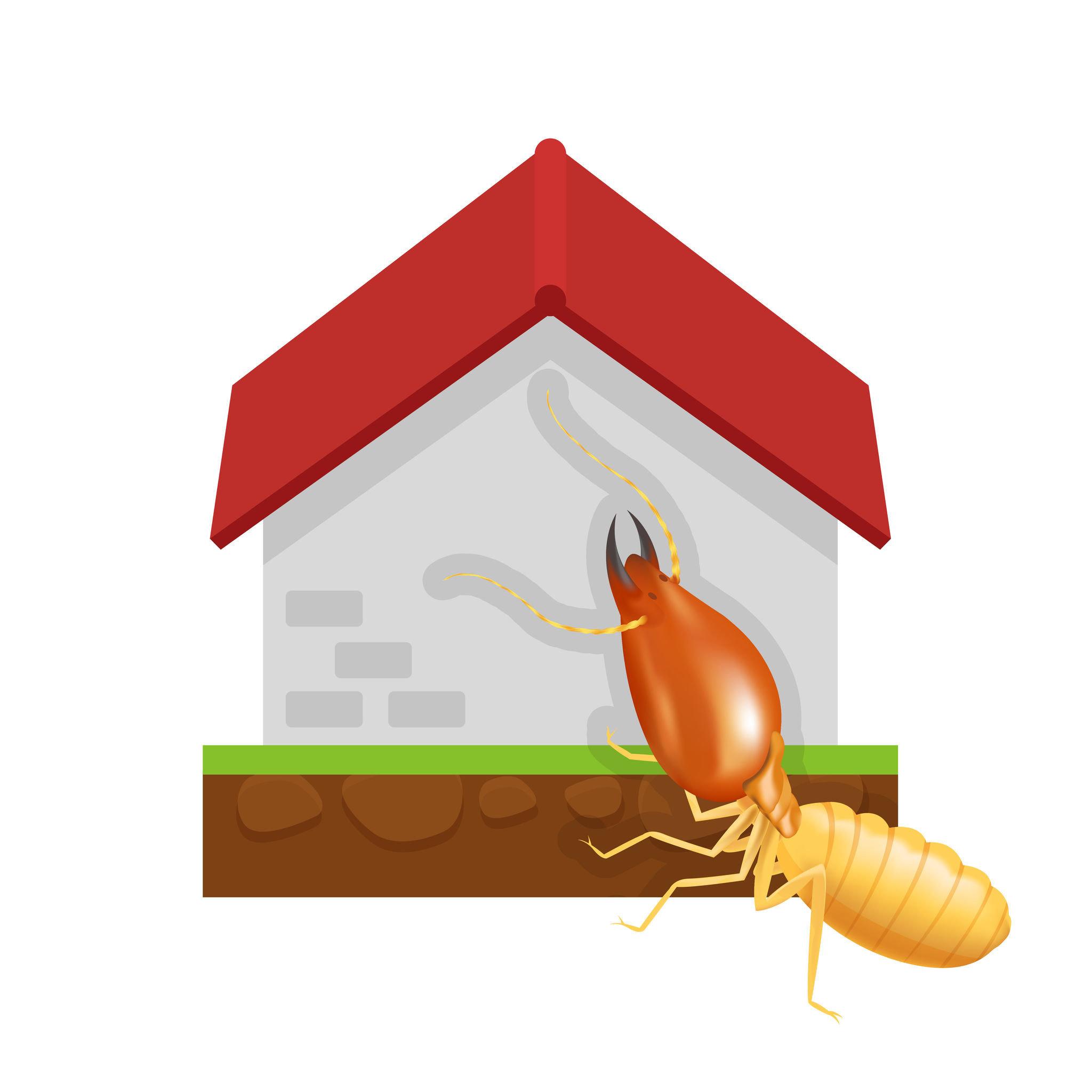 白蟻不限定於夏天或是秋天之類固定的季節發生。白蟻並沒有所謂的產卵季節,蟻后隨時都不斷地繁殖。