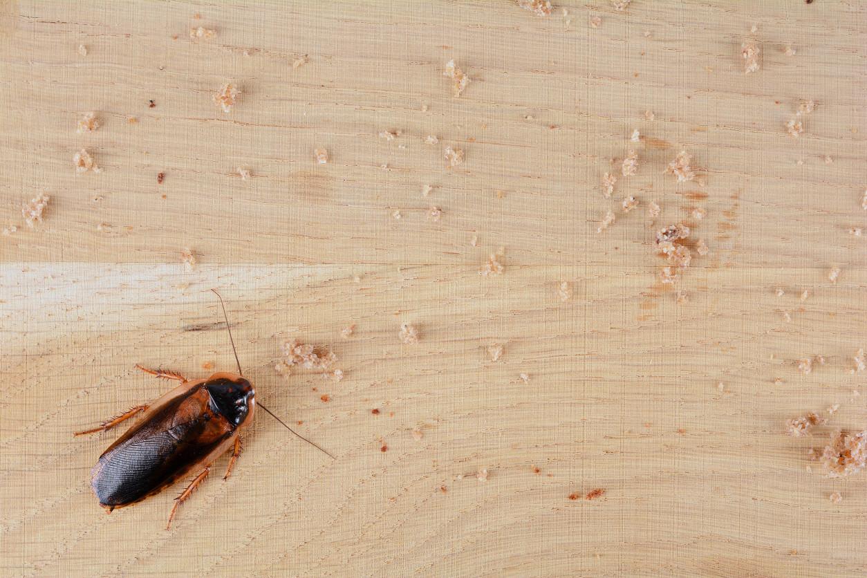 【除蟑螂】保持乾淨的房間,為什麼會出現蟑螂 !