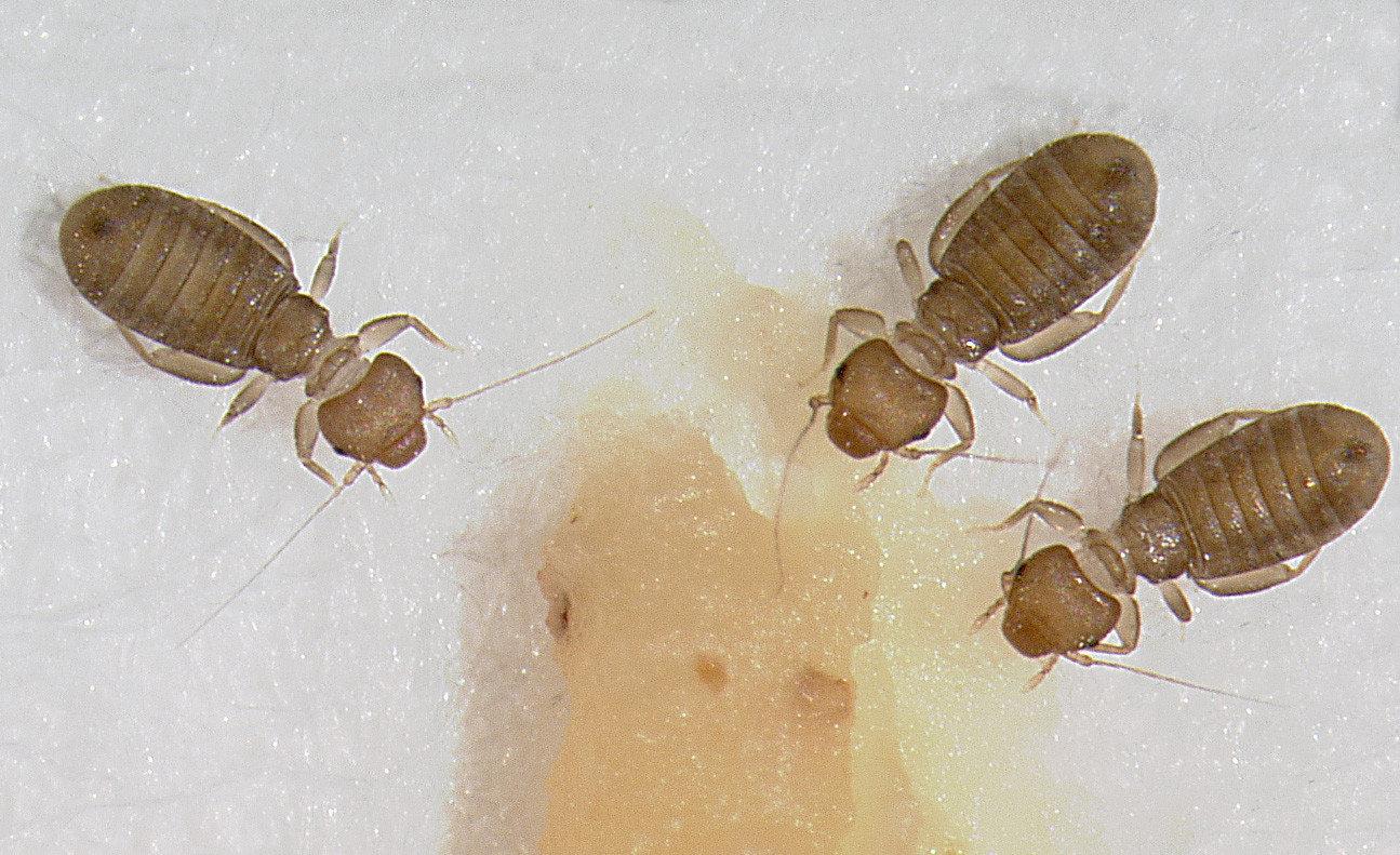【除嚙蟲】潛伏在書本中的生物,該如何防止它爆炸性繁衍