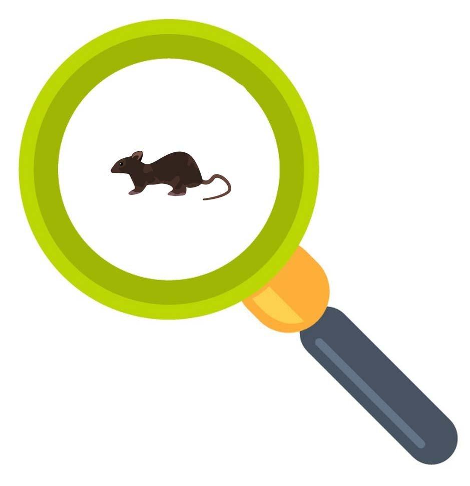 老鼠大便的特徵和分辨方法從天花板內側、牆壁、櫃子等角落處掉落的老鼠大便也可以確定老鼠的種類。
