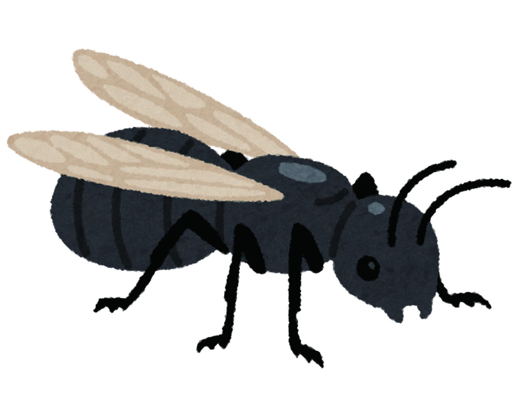 白蟻並沒有特定的產卵季節,與蚊子不同,它們並沒有固定的時間,但是只會在夏季出現。 在房子內白蟻總會以群體的形式生活在巢穴中,其中只會有一個國王與女王在產卵 白蟻紛飛並非每年都會出現,隨著蟻后不間斷的產卵,當巢穴無法容納白蟻的數量 就會出現白蟻紛飛,找尋並組織新的巢穴。