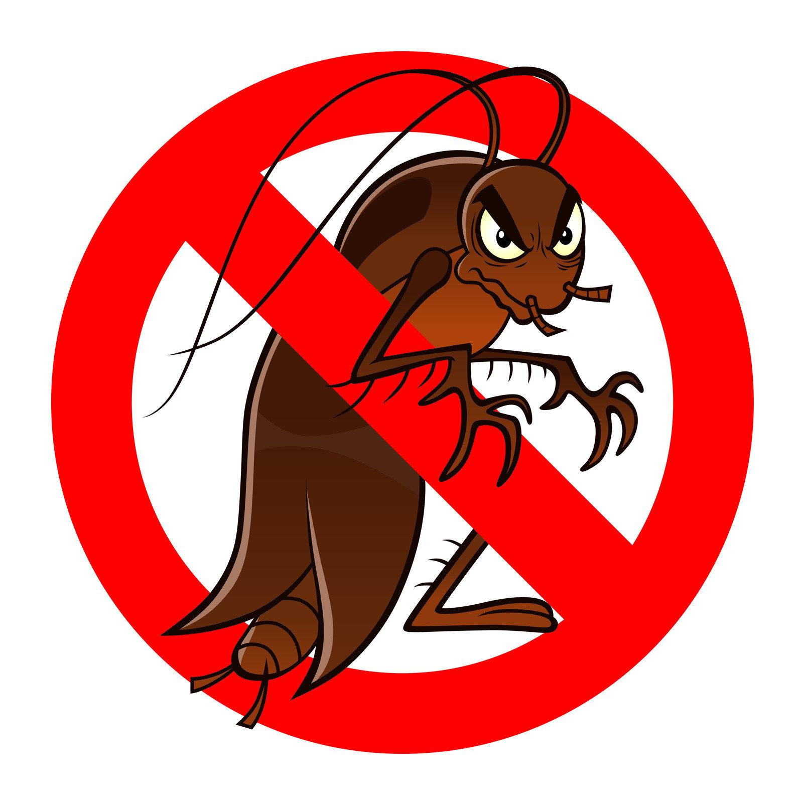 【除蟑螂】關於蟑螂生活的環境,以及有效的防治方式