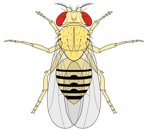 不要再胡亂使用殺蟲劑了!面對害蟲問題時,很多人的首選會是水煙、殺蟲劑等化學藥劑,確實它們的效果快,成效感覺也還不錯,不過既然家中聚集了大量果蠅,也就代表室內有不少牠們的食物,只要這些食物來源沒有斷絕,果蠅就還會再來。