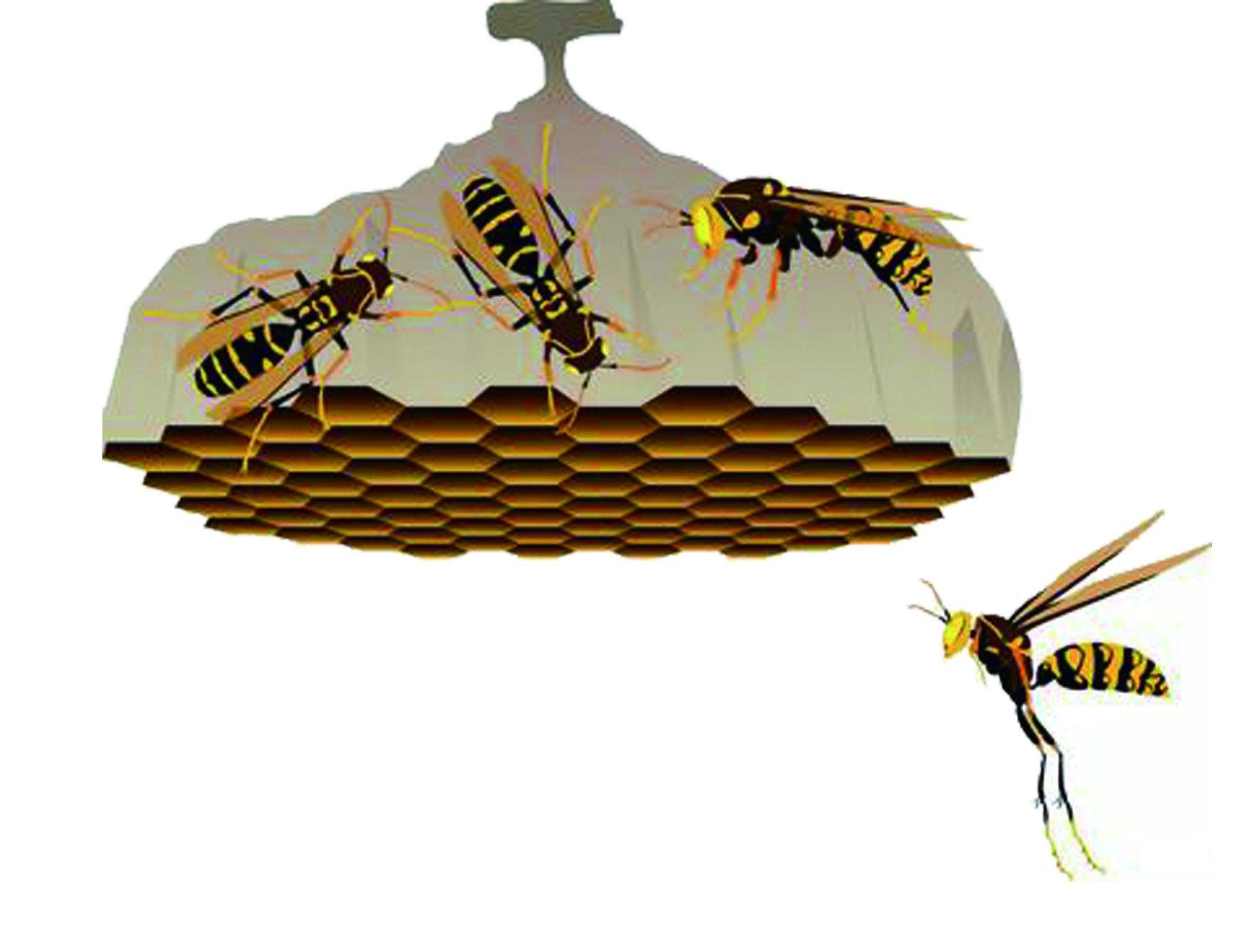長腳蜂亞科,或稱「胡蜂亞科」。成蜂以花蜜、果汁為主食,是最廣泛分布在人類社群中的一種蜂類,不只是山林中,諸如校園、屋簷或陽台也都很容易有牠們的蹤跡。