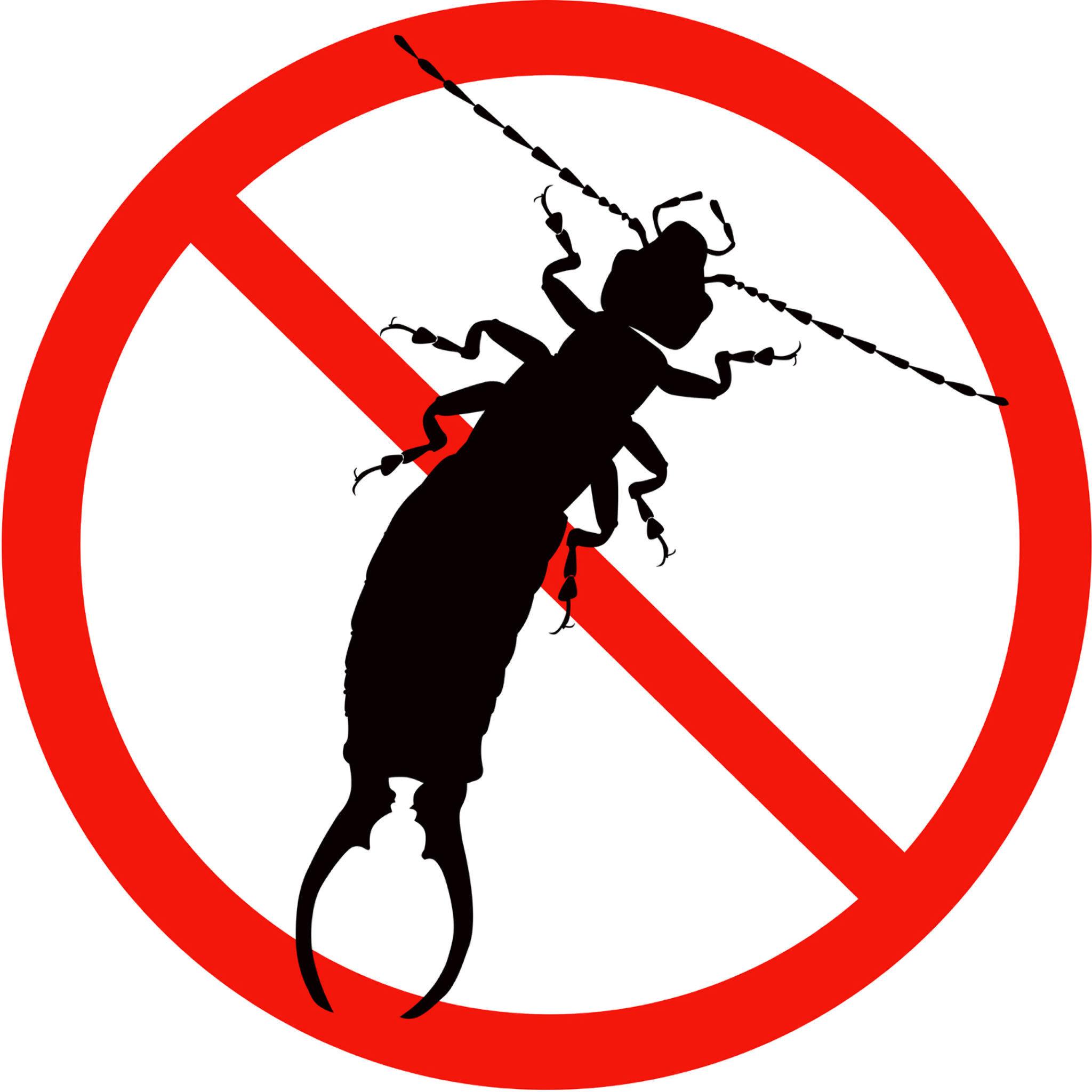 蠼螋,別稱夾板子、剪指甲蟲、夾板蟲、或剪刀蟲、耳夾子蟲、二母夾子。為一種雜食性昆蟲。盛產于熱帶和亞熱帶。