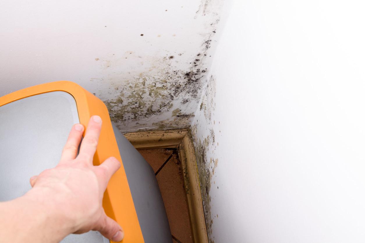 在住宅中,最容易發生黴菌的地方是以下的地方。浴室、廚房、廁所、淋浴間、洗衣機等處 壁櫃和衣櫥等半封閉空間,冷氣空調內部、傢俱的背面、窗戶邊緣等難以清潔的地方。