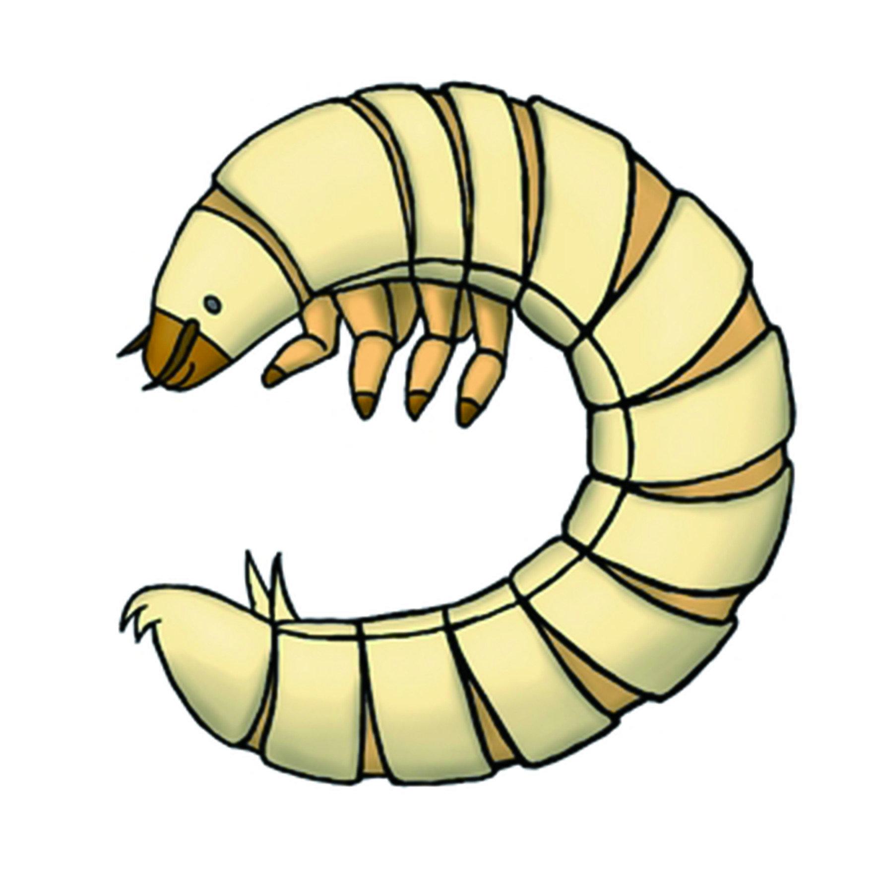 顧名思義,麵包蟲是以麵包、麥麩或腐敗的食物為食,正式中文名為「黃粉蟲」,是一種完全變態的昆蟲,幼蟲為黃色蠕蟲型態,成蟲為會飛的黑色甲蟲。麵包蟲幼蟲喜歡陰暗、潮濕的環境,成蟲也屬於夜行性昆蟲。
