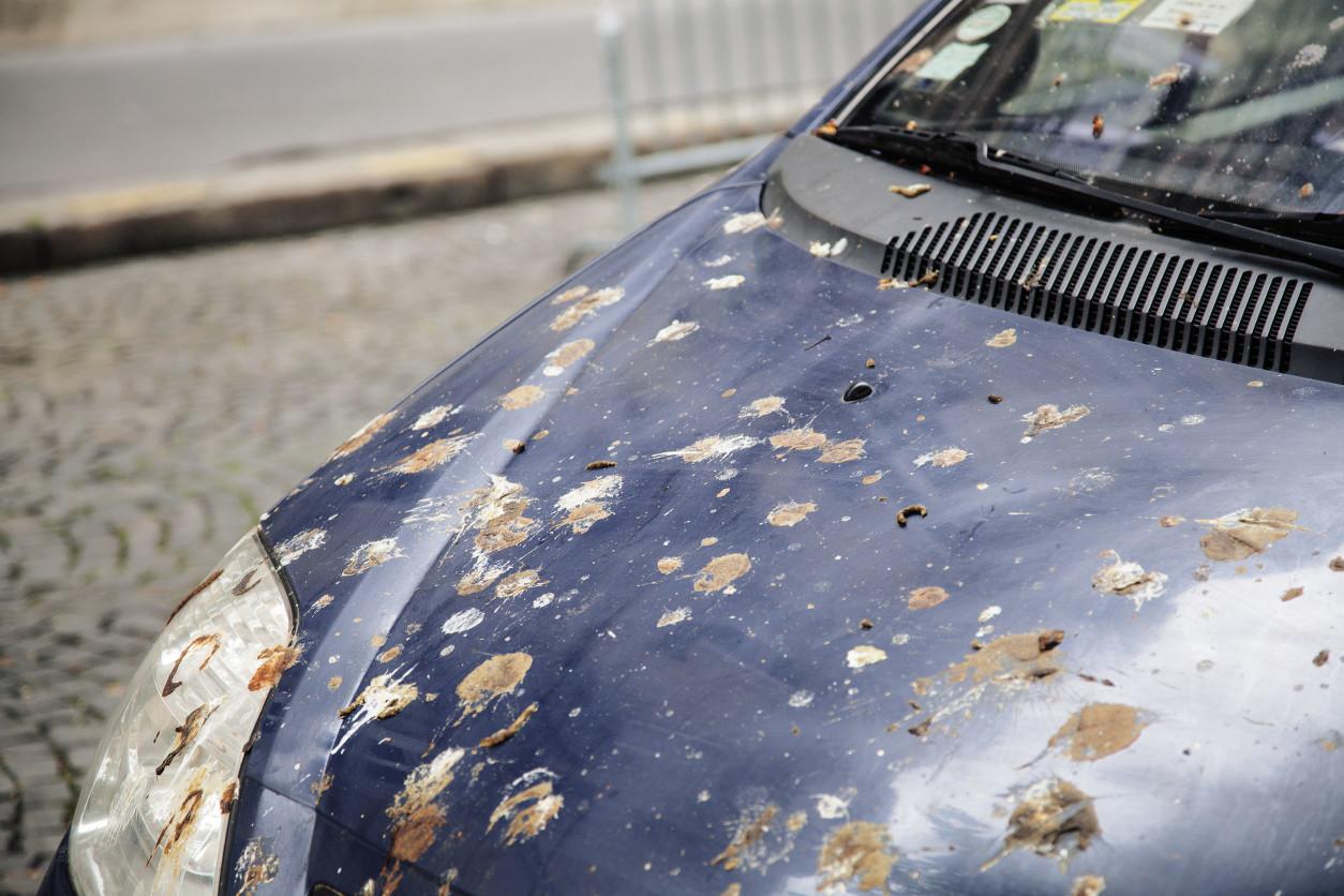汽車引擎蓋上,因為鴿子成群飛行,遭受鴿子排放的糞便汙染.