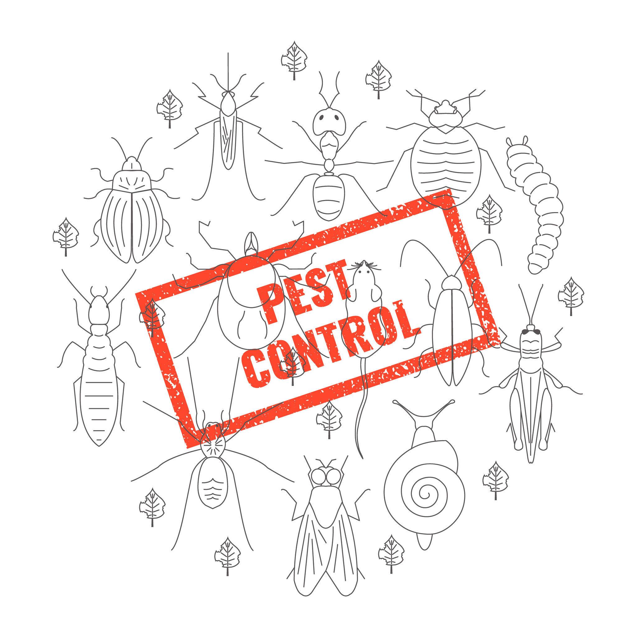 【除蟲公司】環境中常見的害蟲與老鼠防治,營造適合居住的生活環境