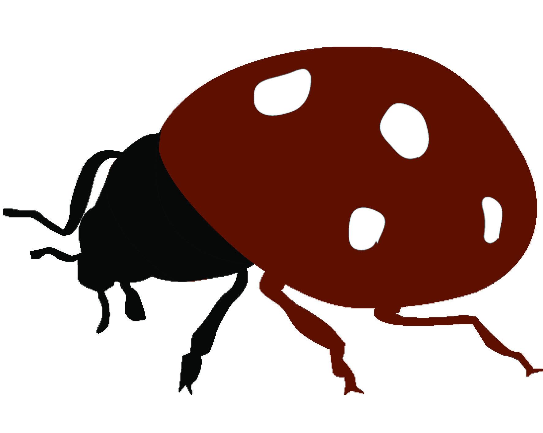 為了防治介殼蟲,民間、政府可說都盡了一切力量。過去引進了一種名為「孟氏隱唇瓢蟲」的肉食瓢蟲作為生物防治,牠們的食量很大,且非常喜愛食用介殼蟲與其蟲卵。