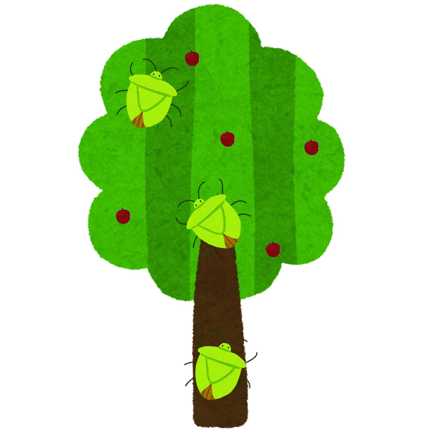荔枝椿象,又稱作「臭屁蟲」、「荔椿」源自於南亞與東南亞,成蟲身體呈橘色或黃色的菱形,幼蟲時期呈橘色且帶有灰色外框,並不難辨認。牠們多出現在荔枝、龍眼樹上,都市中則以台灣欒樹與其他果樹上最為常見,牠們以吸食植物汁液為食,時常造成植物生長不良的狀況,蟲害嚴重時甚至能夠使植物整株枯死。