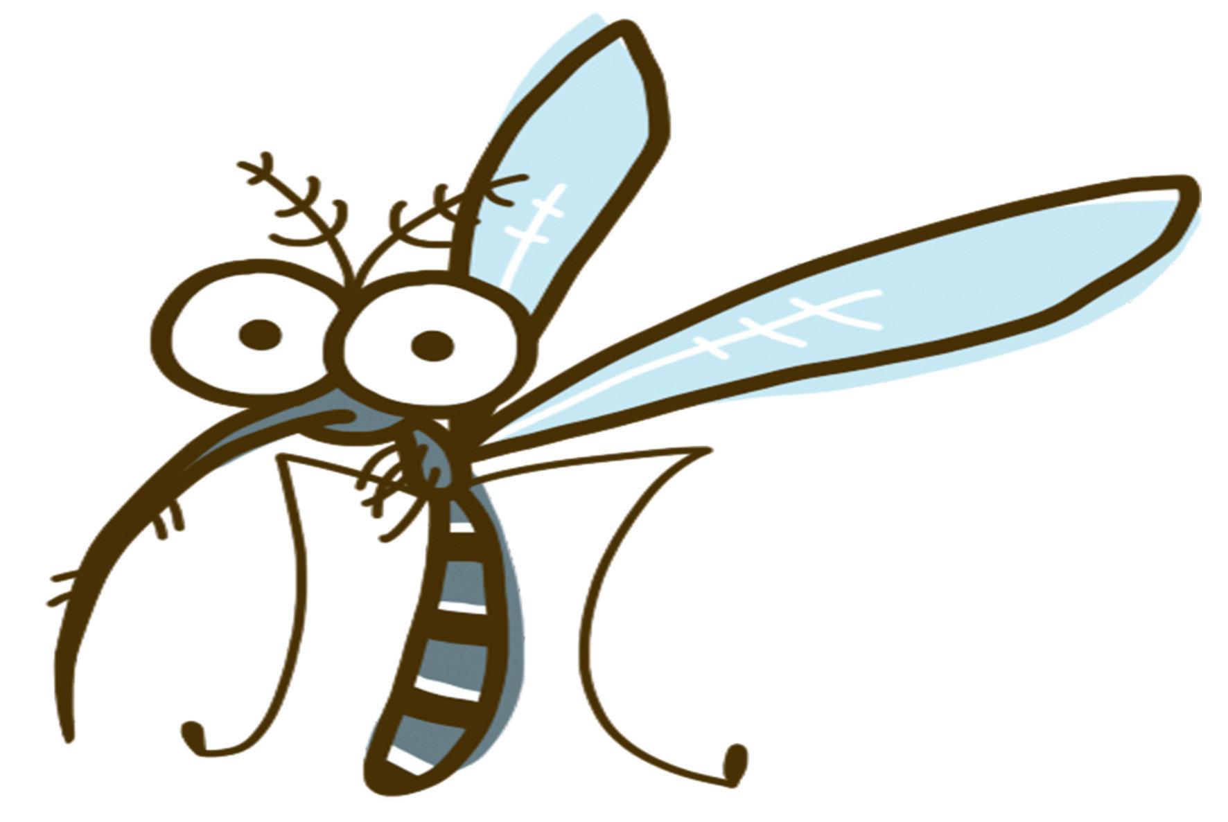 白線斑蚊體積較大,體長約5毫米左右,最為顯著的特徵是一雙黑白相間的長腳。因為只能在吸血後擁有產卵能力,因此它們會在白天不斷的尋找獵物。