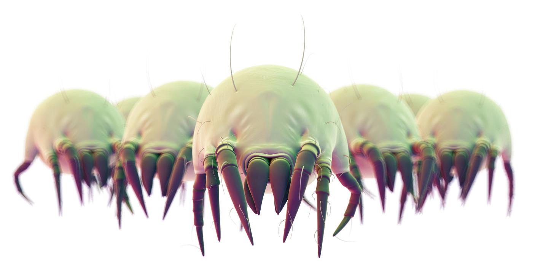 理性分清螨蟲的種類,才能對症下藥徹底去除螨蟲