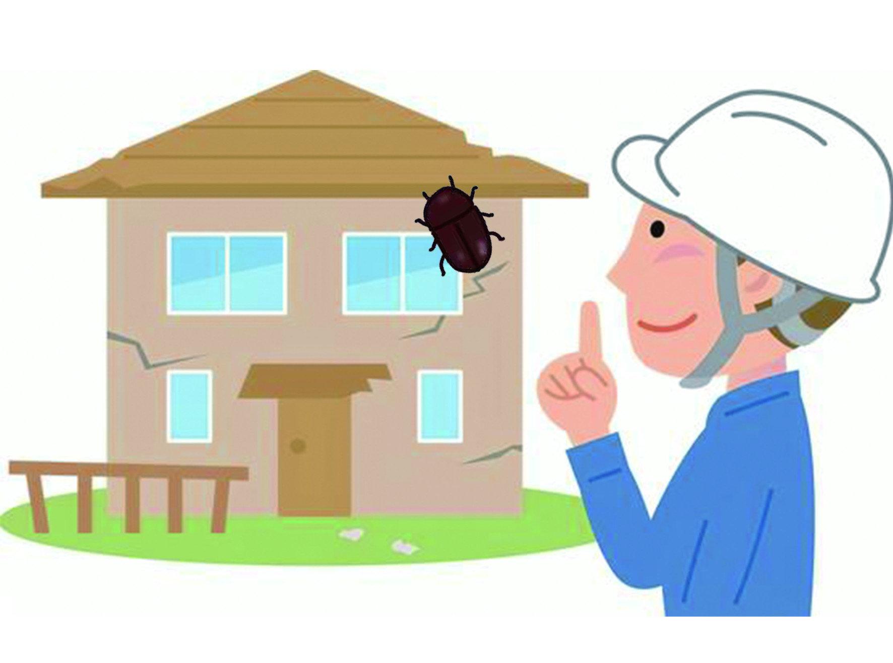 【除煙甲蟲】乾燥食品與草蓆孳生的煙甲蟲,防治須注意四重點 !!