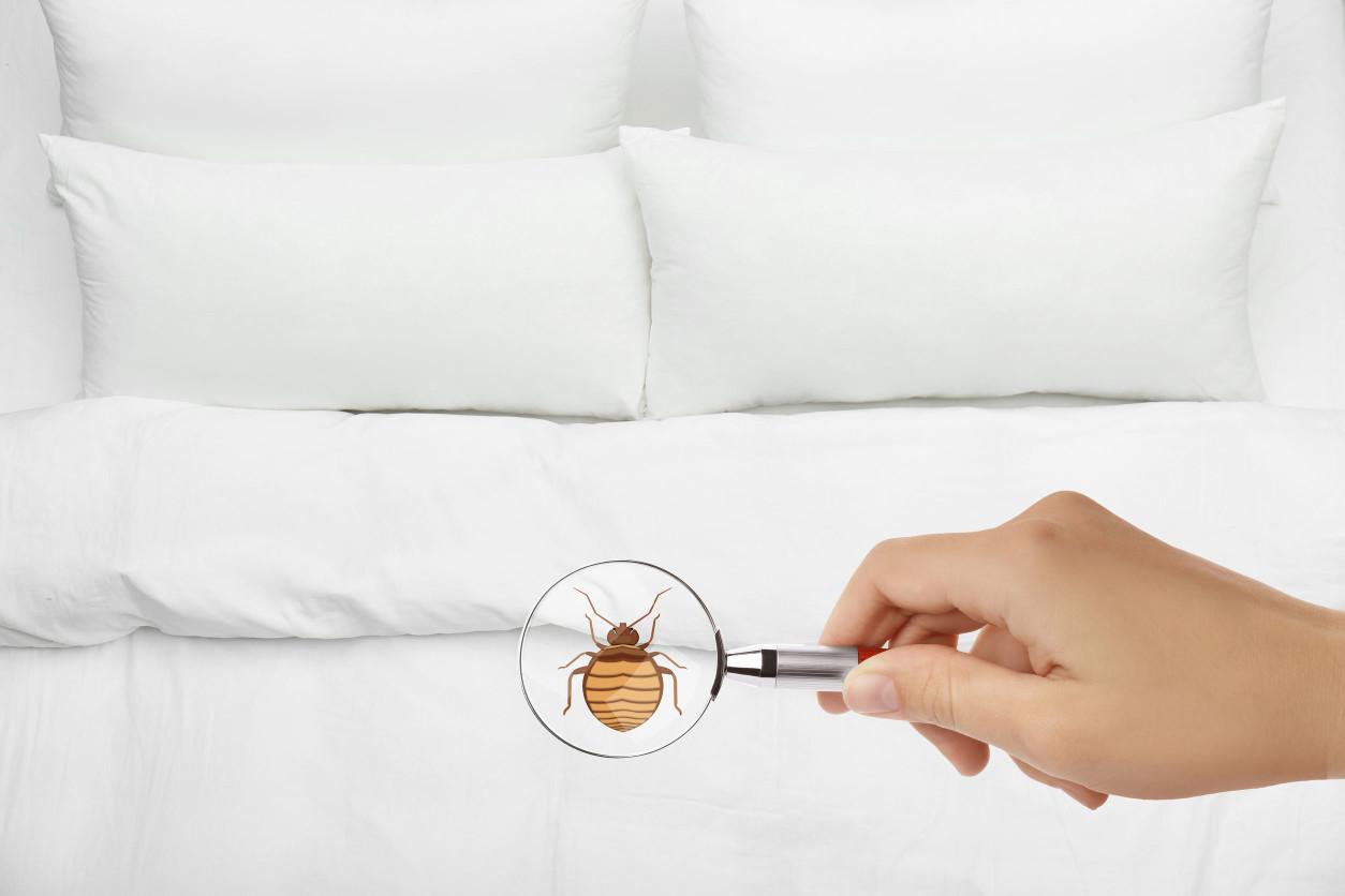 臭蟲(床蝨)的防治