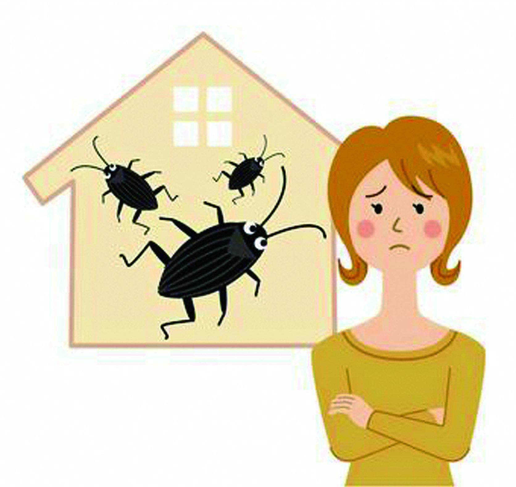 『除/滅蟑螂問題』蟑螂大舉入侵,委託除蟑螂專家防治常見的問題 !!