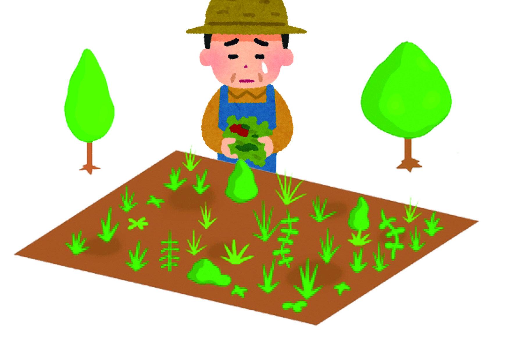 【除介殼蟲】植物上出現許多毛絨的附著物,討厭的花卉植物天敵「介殼蟲」 !