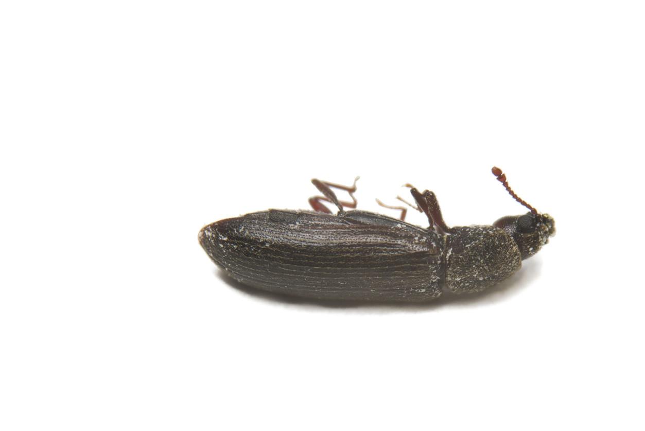 【除蠹蟲】牆壁上充滿蟲蛀的小孔,都發什麼在什麼時候 !