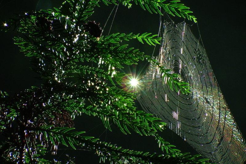蜘蛛更為人津津樂道的,或許是牠們繁殖的特色。許多種類的雌性蜘蛛在交配尾聲時會吃掉雄性蜘蛛,作為所需的營養來源。