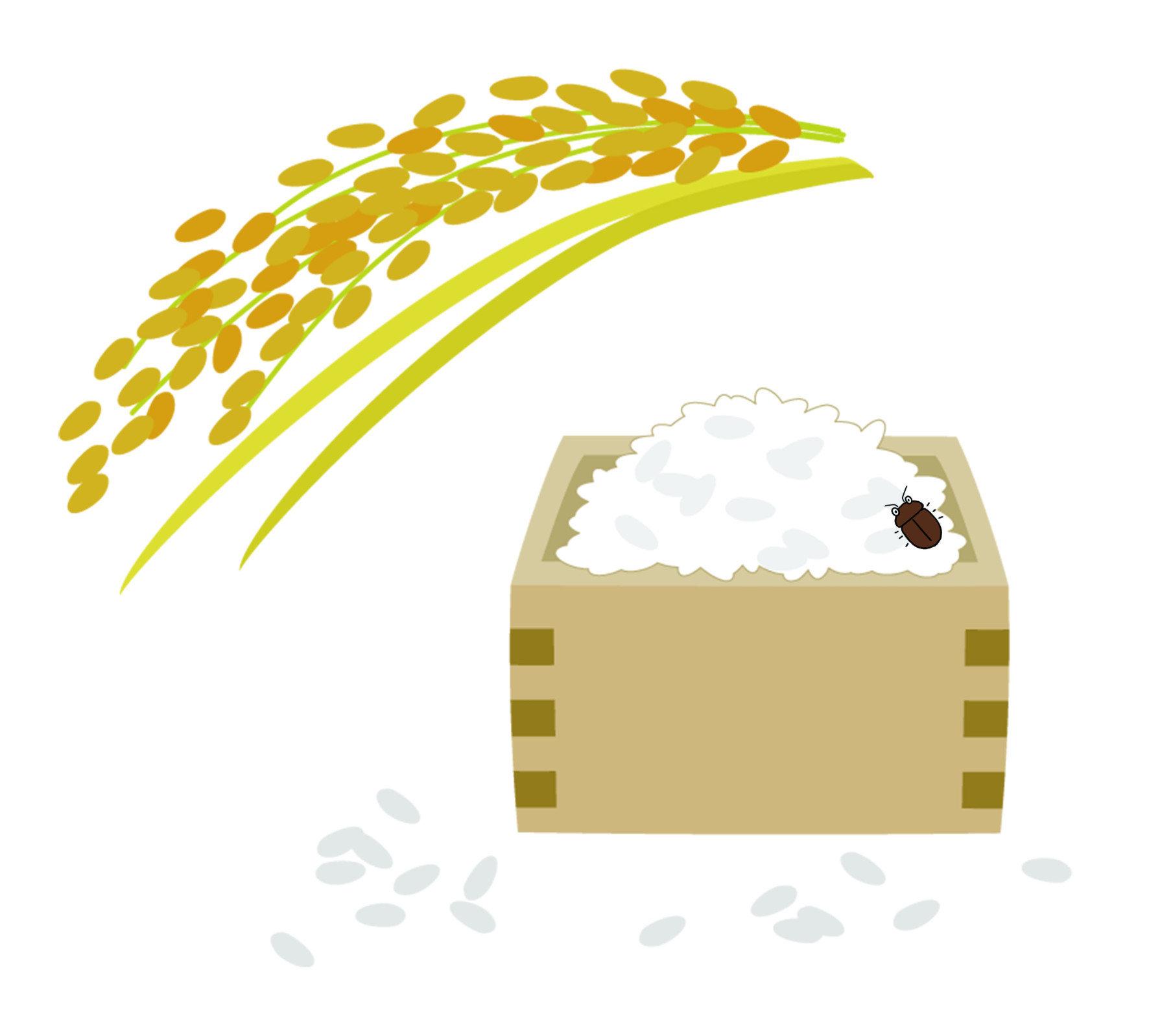 穀蠹身體呈紅褐色或黑褐色,略帶些光澤,成蟲體長約2~3毫米,呈長圓筒狀。是貯糧中最主要的害蟲之一,食性複雜且多元,包括禾穀類、乾果、中藥材、竹器都是穀蠹為害的目標,其中又以「稻米」、「小麥」和「麵粉」最為嚴重,往往造成嚴重的損失,卻又難以預防。