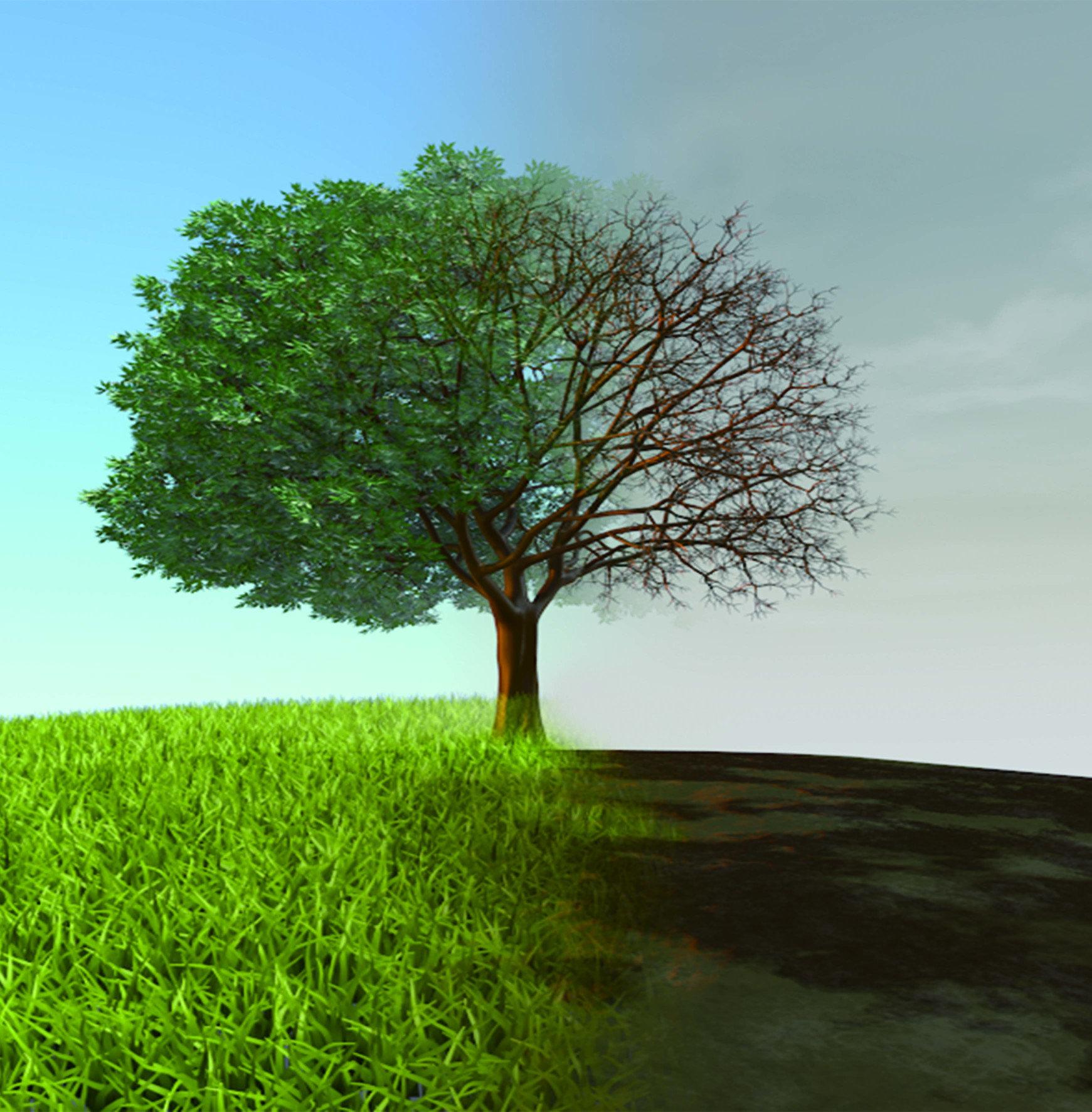 路樹也可能是空汙兇手!造成空氣污染的物質可以是固態顆粒、液滴,或是氣體;污染物可以是人造的,也可以是天然的。