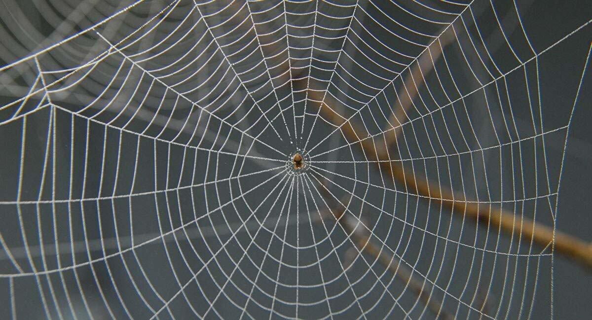 蜘蛛絲是一種絲蛋白,堅韌而富有彈性,能被用於製造「人工血管」、「人工肌腱」。 其單位截面積下的張力(強度)甚至是鋼的5至6倍,足以製作防彈衣。