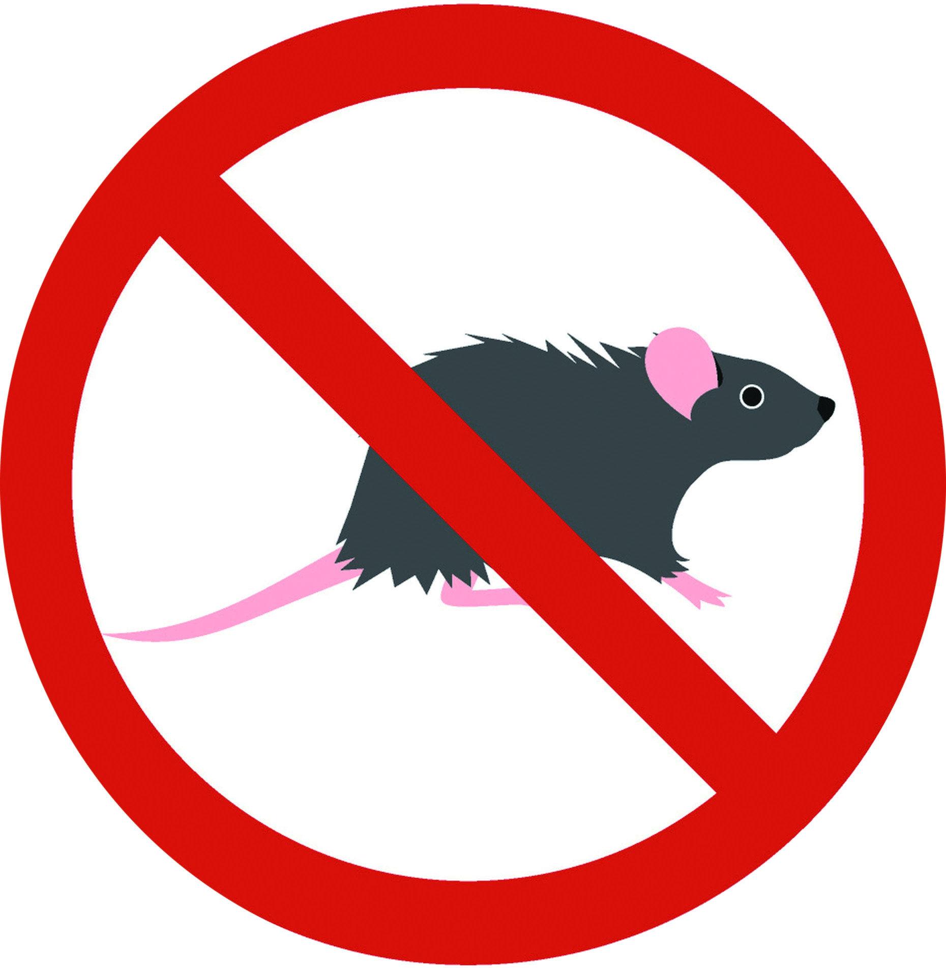 除了食物以外、牆壁、天花板、電線也會遭到老鼠啃咬