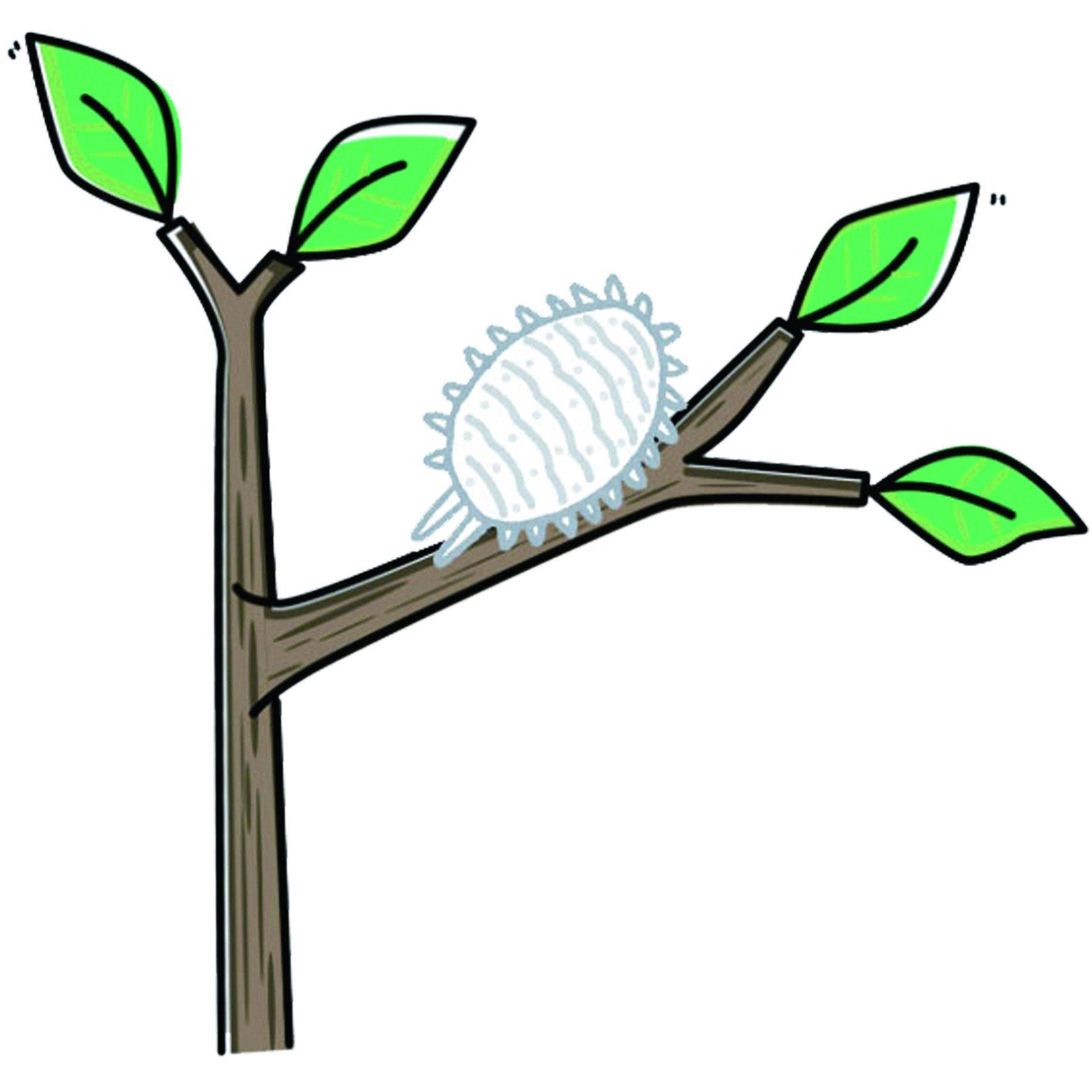 介殼蟲,又可簡稱為「介蟲」。牠們以吸食植物汁液維生,同時也是這樣的習性對植物產生莫大的危害。牠們會攀附在植物上,數量少時會使葉片上產生黃褐色或白色的零星斑點,看似枯萎一般;大量聚集時更會使得整個感染部位發黑,甚至整顆植物發黑都有可能。