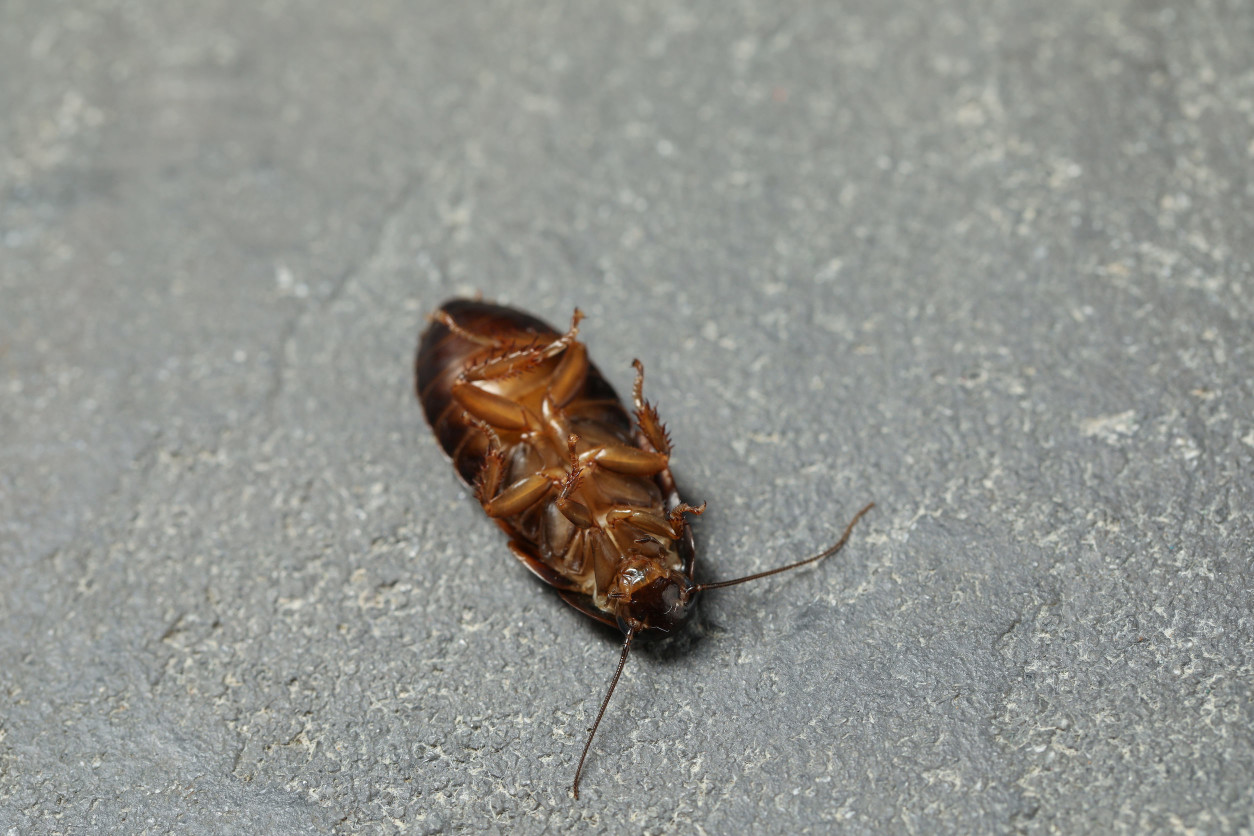 搬家後可以採取預防蟑螂的方式,不論您是租房子或是剛購買新房屋,請不要擔心,立即採取預防蟑螂的方法吧!!