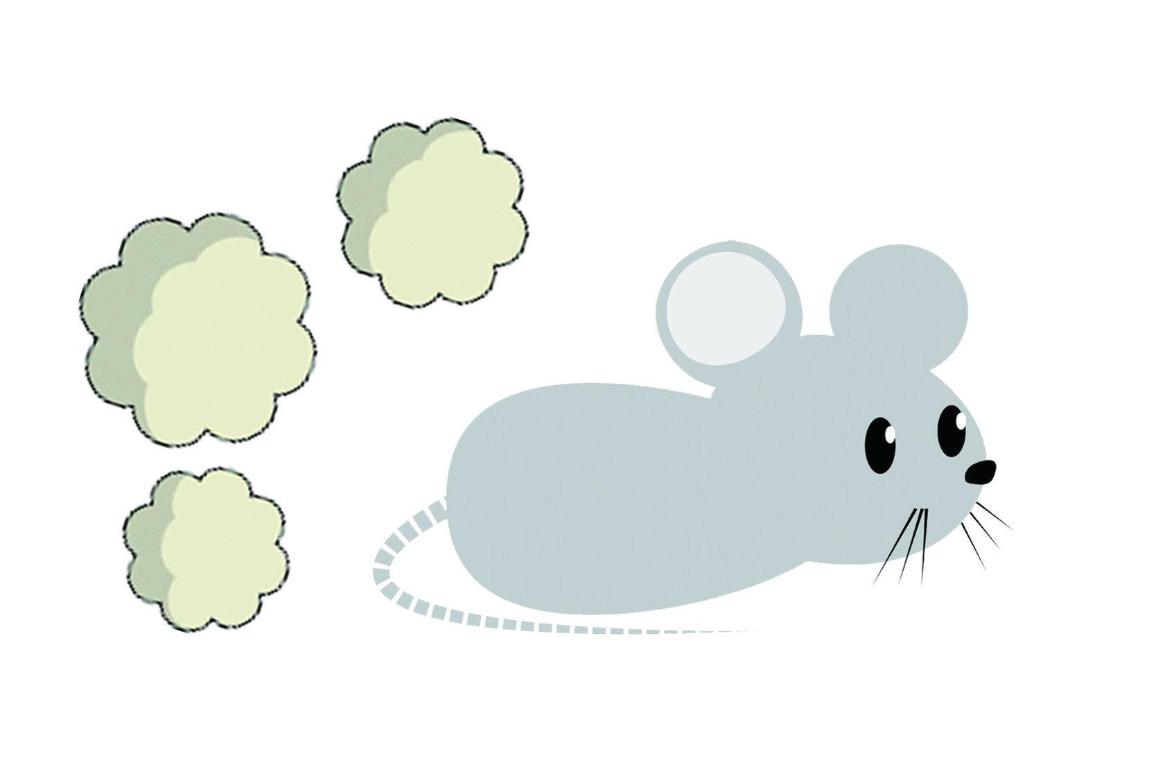 據說會捉老鼠的貓咪,見到了為型相似的錢鼠也會不為所動,即便放到牠們面前,也不願把玩一番。那是因為錢鼠身上散發著一股味道,源自於身體兩側的「麝香腺」,也因此有些人稱錢鼠為「香鼠」或「臭鼠」。