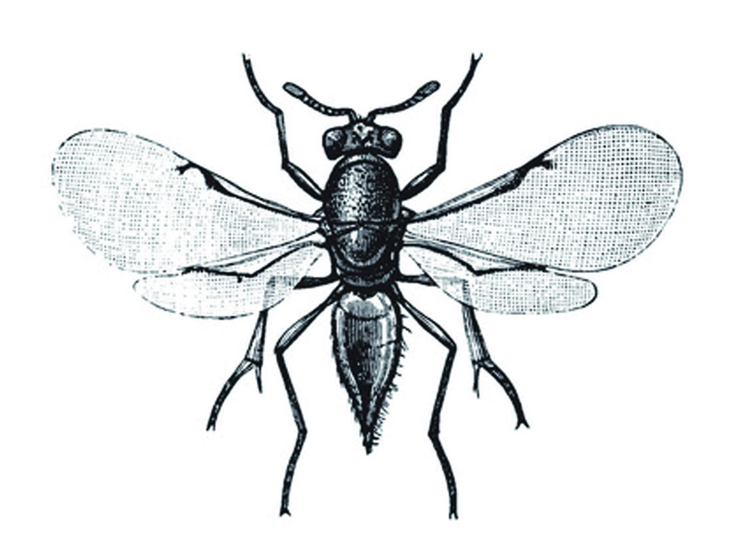 另一種常見的防治方式是屬於「生物防治」,透過釋放荔枝椿象的天敵, 一種叫做「平復小蜂」的蜜蜂,牠們產卵時會選擇產在荔枝椿象的卵裡面, 導致荔枝椿象的卵無法孵化,進而達到抑制荔枝椿象繁衍的目的。 當然,也有部分核准的農藥是適用於防治荔枝椿象。