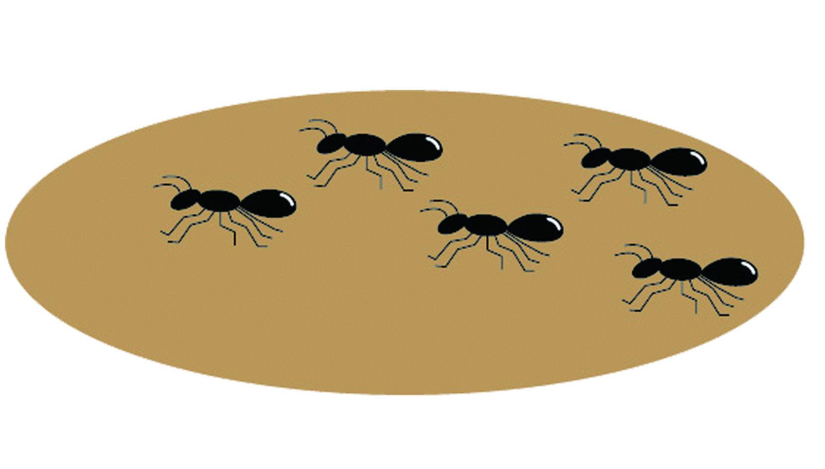 螞蟻在我們的生活中可謂最常見的一種,時不時身邊可能就出現幾隻,量少時倒還好,即便不理會牠都不會造成問題;一大群出沒時可就不一樣了,遭咬傷時不僅又酸又痛,最嚴重的狀況還可能引起蜂窩性組織炎,實在不能小看牠們。有一種校園中常見的螞蟻稱作「疣胸琉璃蟻」,身為原生種的牠們在自然界中扮演了重要的腳色,為了可以享用香甜的花蜜,牠們會負責守護植物不受蝸牛或毛蟲的侵擾。