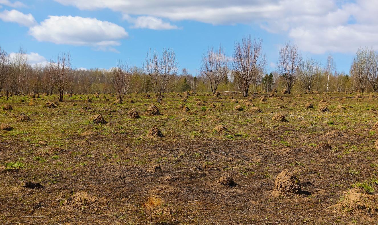 入侵紅火蟻喜歡築巢在日照充足、開闊的土地上,所以像是農地、苗圃、草坪、安全島、人行道這樣被人工整地過的環境都是常見的火蟻蟻丘出現點。
