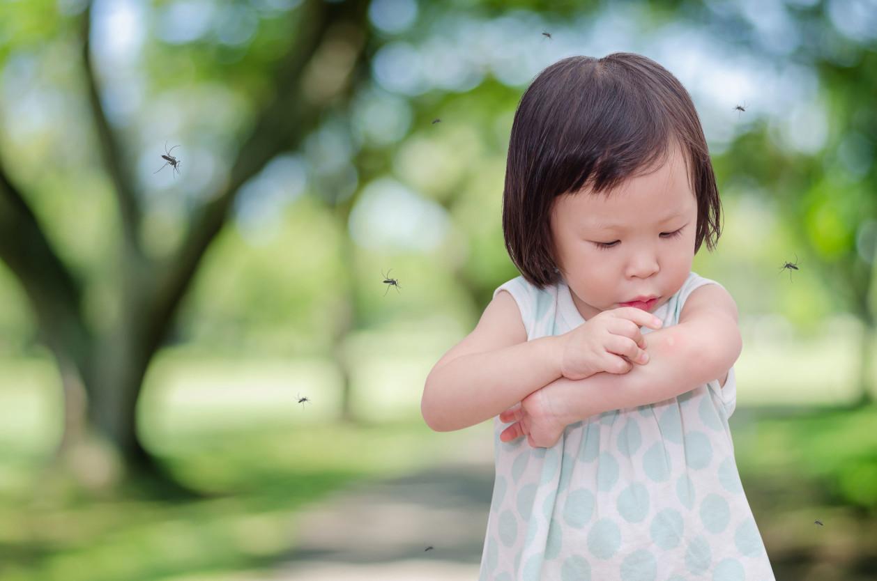 夏季經常會發現郊外有許多蚊蠅,不停地滋擾著人們並會吸取人血
