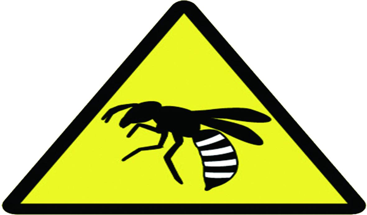 『除蜜蜂』房子遭蜜蜂入侵築巢,如何有效擺脫蜜蜂與保護自身安全。