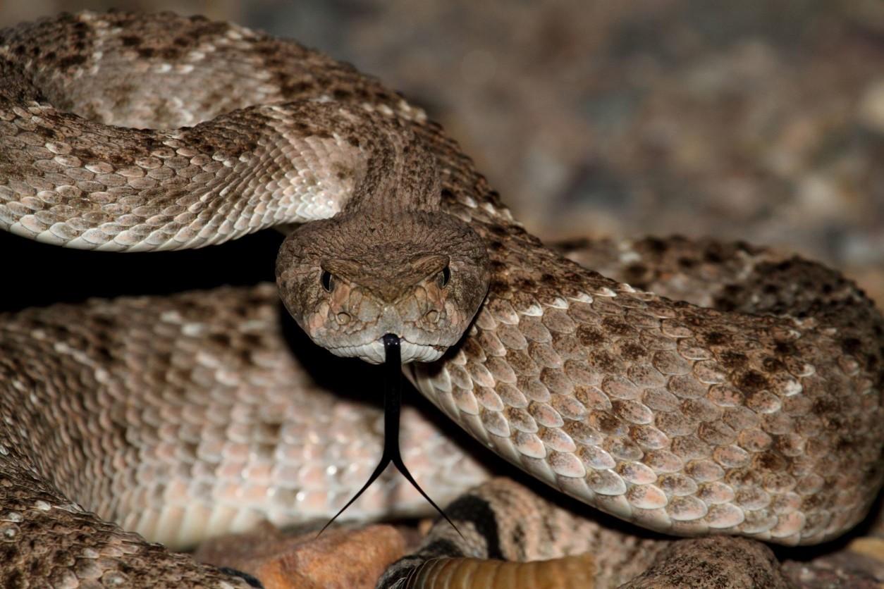 『驅蛇』看到蛇別害怕,教你打草不驚蛇