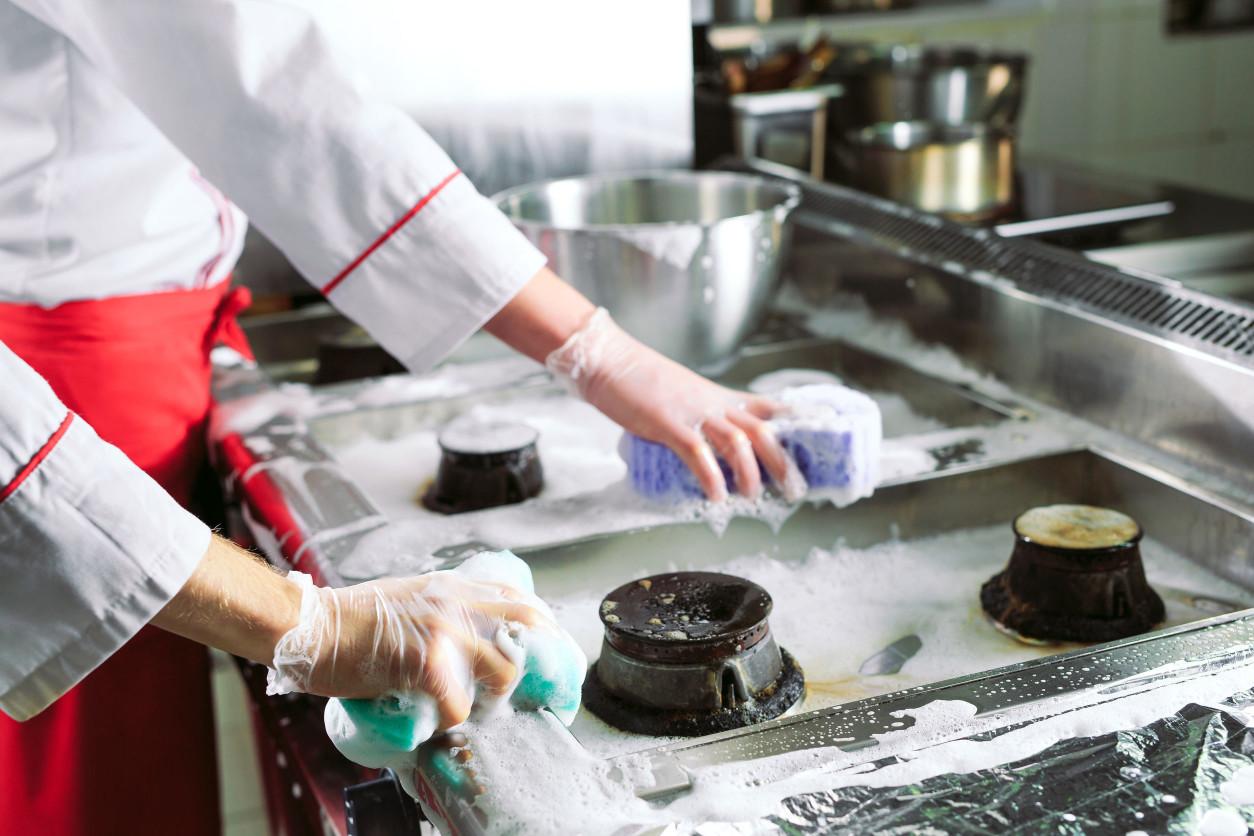 在餐廳或是飯店內,有許多食物來源,並且有溫暖的環境可以築巢,例如冷藏冰箱或烤麵包機內。