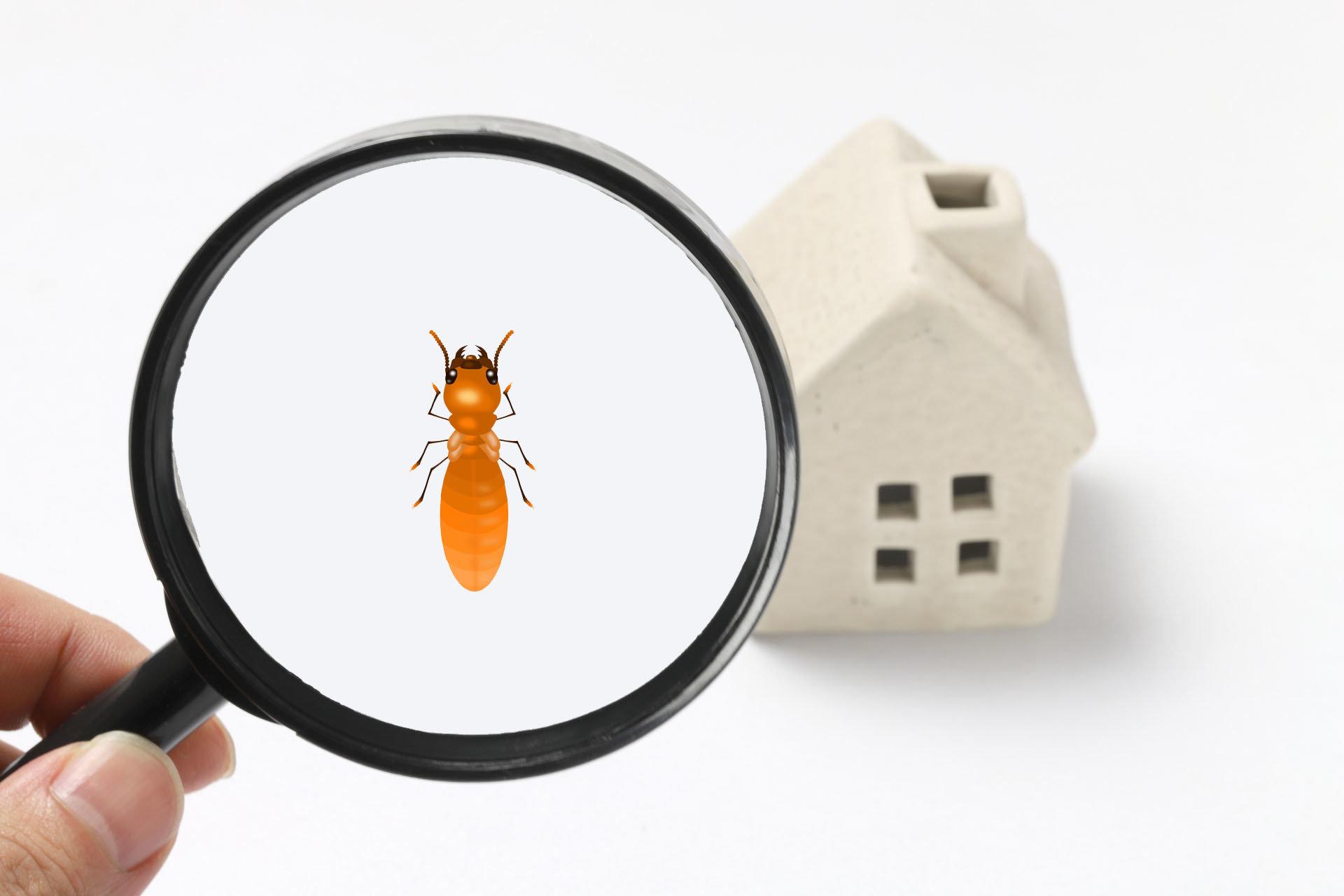 【除乾木白蟻】外來種白蟻對房屋的破壞迅速增加,有哪些預防措施 ?