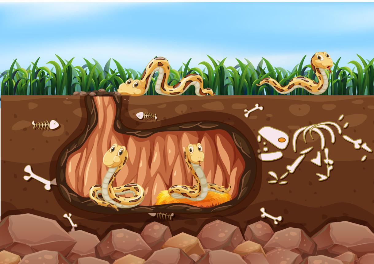 蛇的食物,蛇吃魚嗎?蛇是一種冷血動物,一般的蛇主要以鳥、老鼠、青蛙、雞蛋、兔子等小動物為食