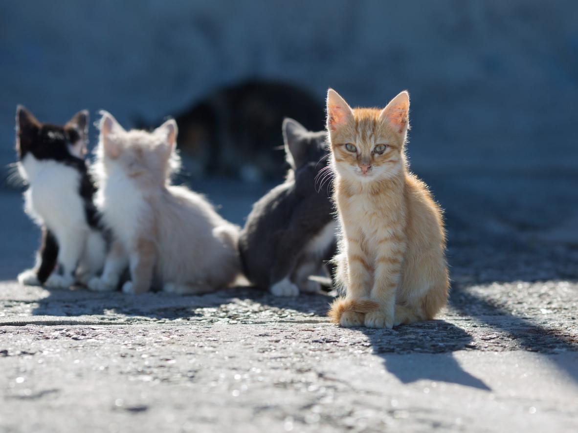 【驅/趕貓】經常遭流浪貓入侵困擾,3種方法來擺脫流浪貓的糾纏 !!