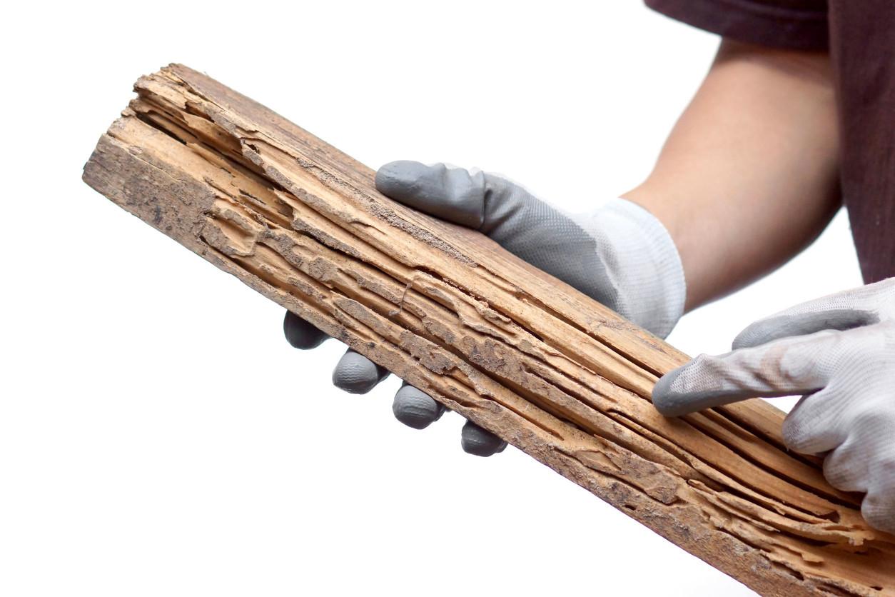 住宅的木材,遭受白蟻侵蝕後,就會變得脆弱且破爛。為了不產生白蟻,最重要的是不要創造白蟻喜歡的環境。
