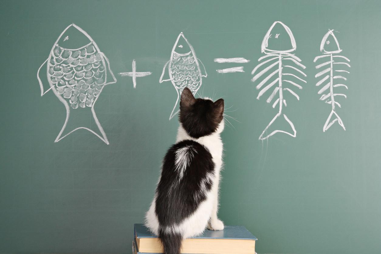 貓是在世界各地廣泛飼養的小型動物,據說原本是人類為捕獲老鼠而飼養的野貓遭到馴化。