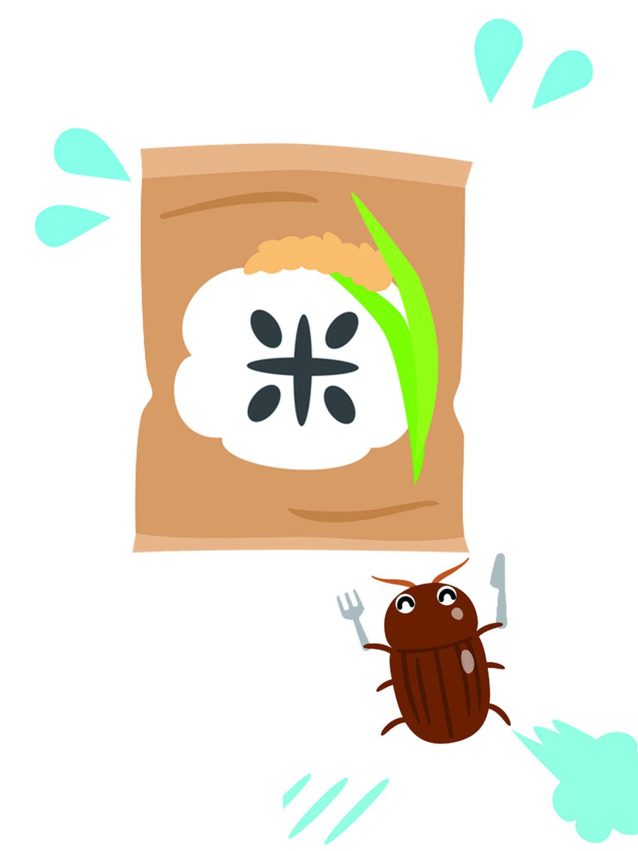 穀蠹的幼蟲與成蟲都會危害穀物,幼蟲在一孵化後即會開始啃食穀粒內部,老熟幼蟲甚至在穀粒內化蛹,對穀物造成汙染。蟲蛹約需4~5日羽化成蟲,穀蠹成蟲會在穀粒間移動,就是我們看到的「米蟲」。