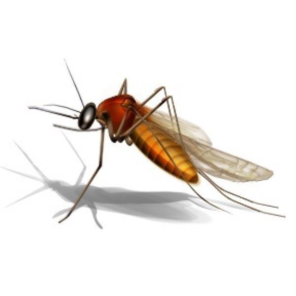 蚊子的防治