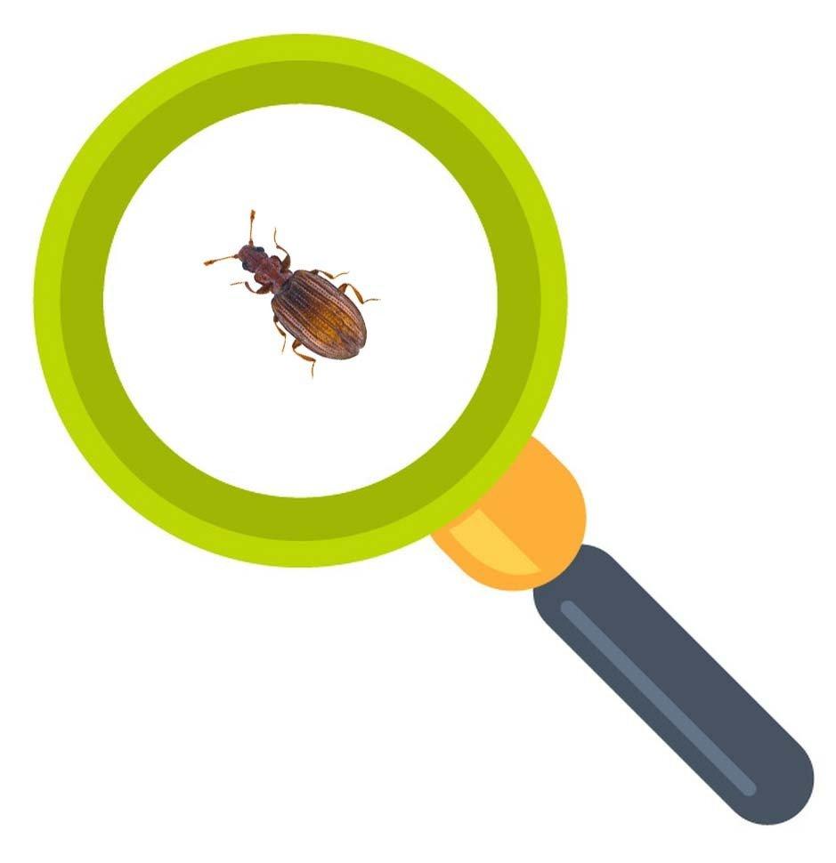 是否曾經在屋內牆壁上看到幾個緩緩移動的小黑點呢?走近一看居然是長有一對觸角、擁有硬殼的黑色小蟲,而且短時間內似乎有越來越多的趨勢。這是一種叫做「姬薪蟲」的害蟲,又稱作「灰泥甲蟲」,與嚙蟲一樣被歸類為俗稱的潮濕蟲。
