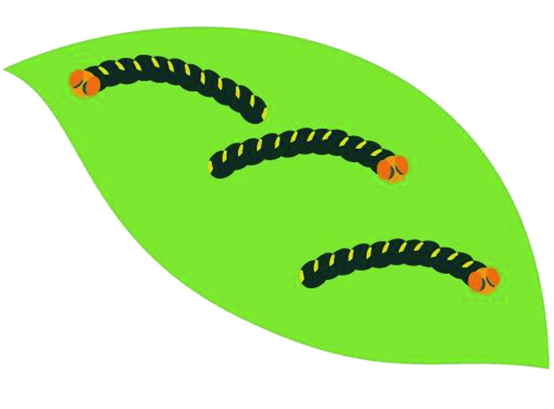 不只是人類懼怕毛毛蟲,植物更是害怕遭到毛毛蟲的侵襲,例如「夜盜蟲」就有可能一夜之間將葉子啃食殆盡。因此,無論農業、居家都必須好好面對毛毛蟲的侵擾問題。