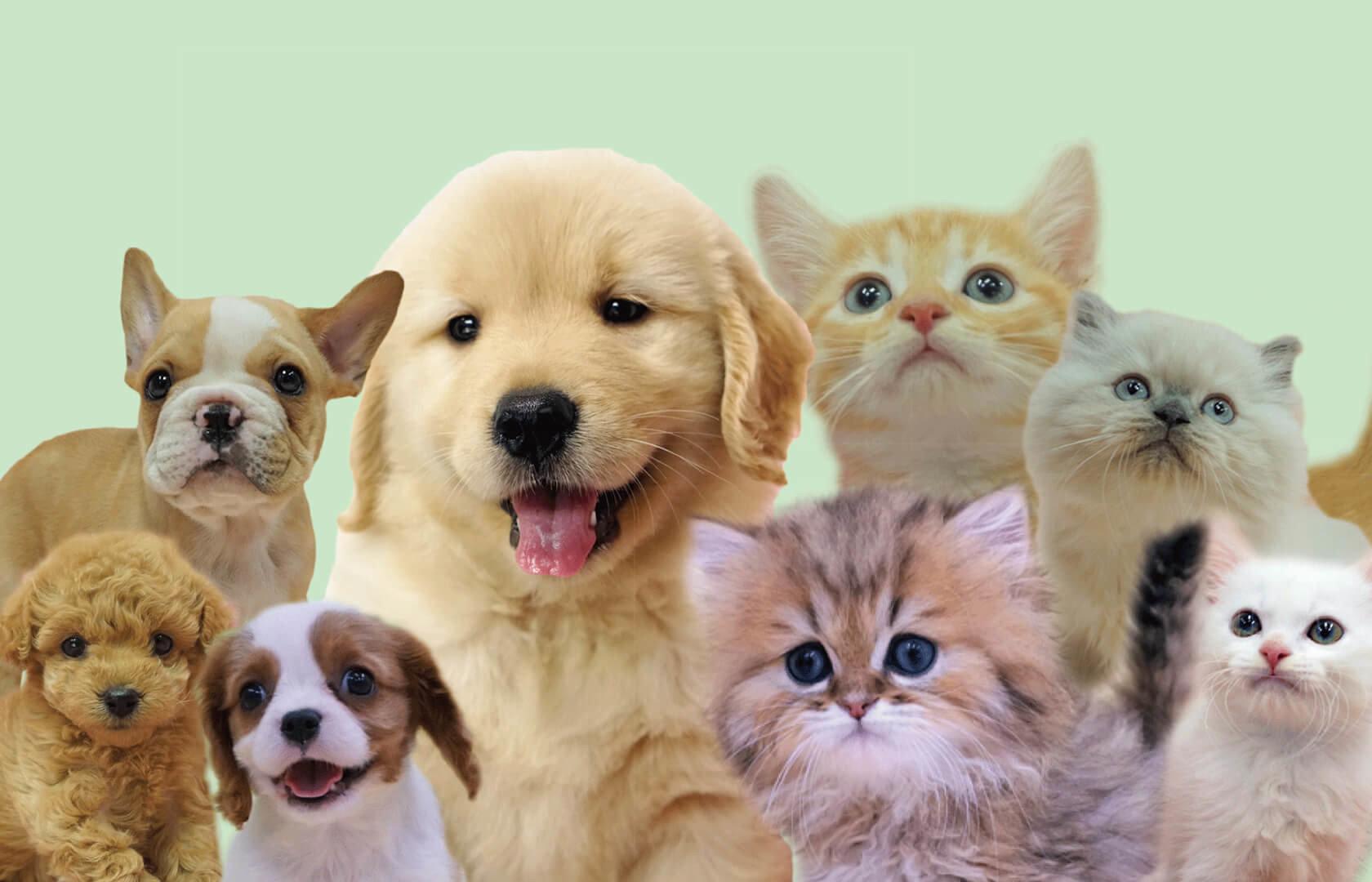 影響寵物健康的「蟲蟲危機」現代人喜歡飼養小貓、小狗來作伴,每隻寵物都是飼主心中的寶貝,寵物的身體健康絕對是飼主最在乎的事情之一。