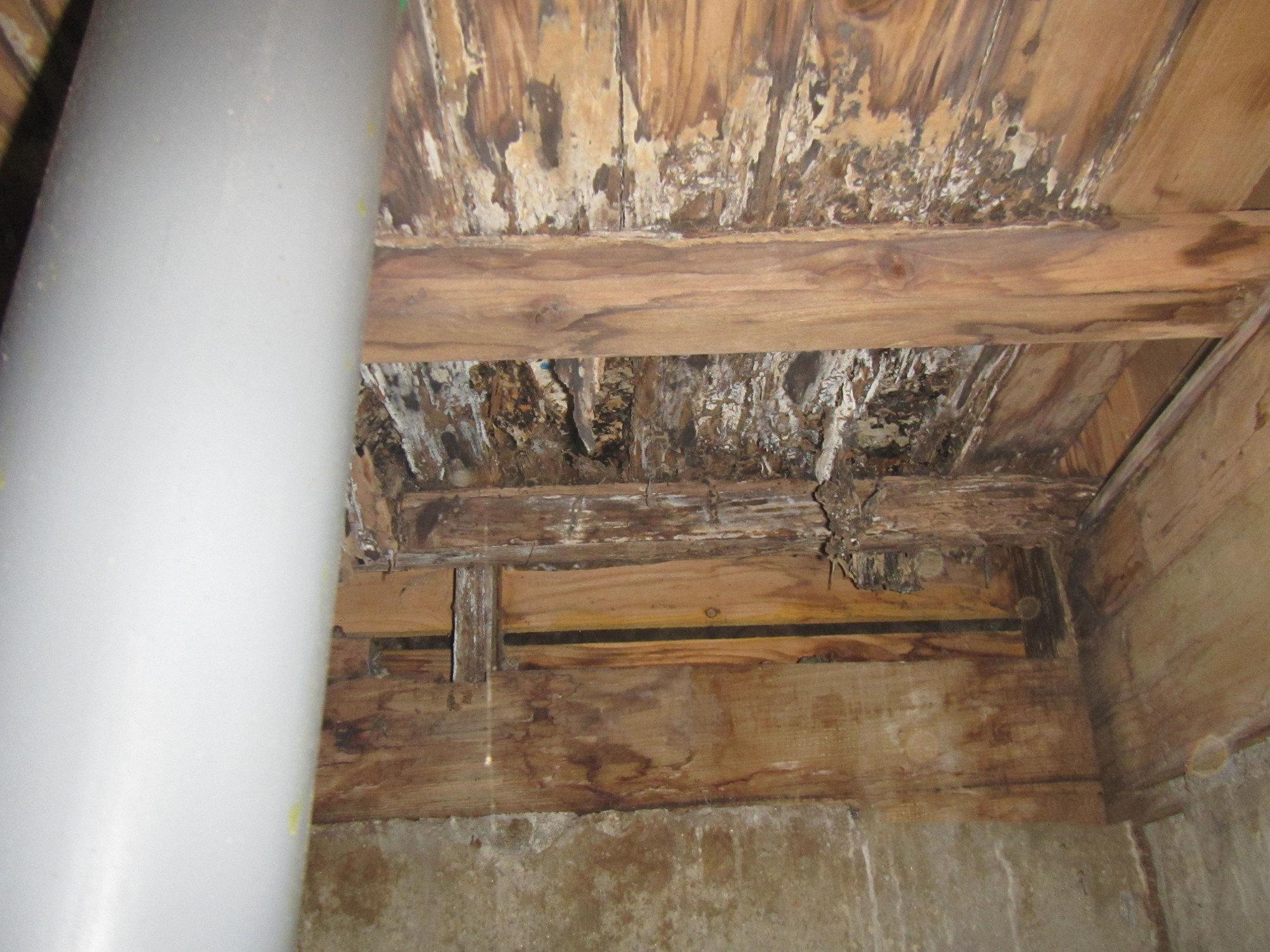 乾木白蟻是木白蟻科的俗稱,而台灣較為常見的品種叫做「截頭堆砂白蟻」。這些木白蟻習慣啃食乾燥木頭,對家中木造家具、建築結構造成損害。
