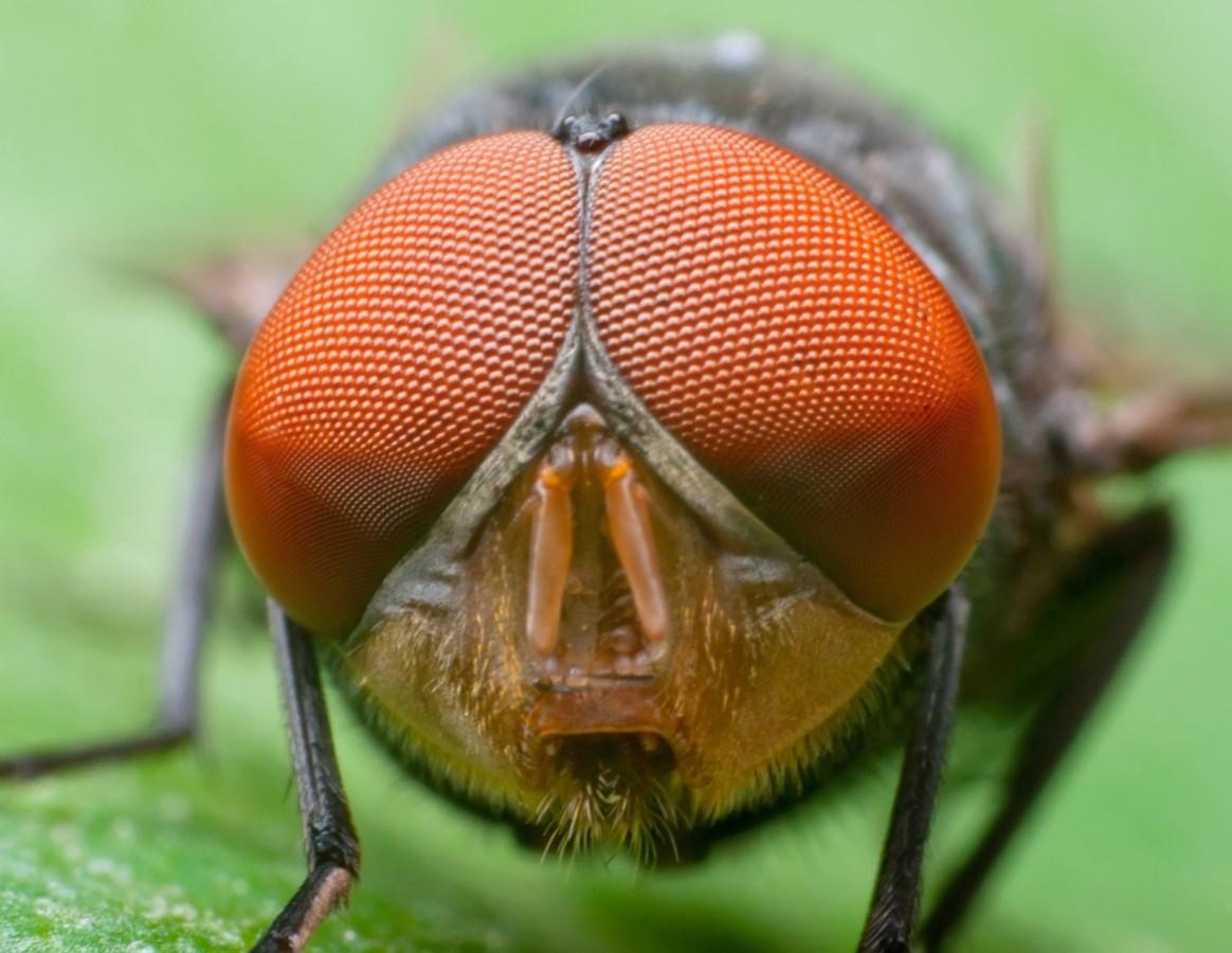 『除蒼蠅』蒼蠅飛來飛去,消滅蒼蠅有撇步